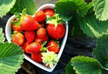 Тръгнах си от Англия и цял живот ще съжалявам, че не останах да бера ягоди там!