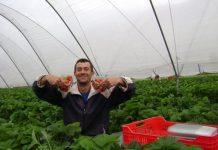 Българи в Англия. Българин направи най-голямата ферма за ягоди и малини