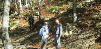 Вековните букови гори в Централен Балкан вече са в списъка на ЮНЕСКО