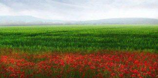 Обичам България, защото се чувствам Българин!