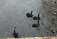 Страшно знамение се появи в река край Луковит