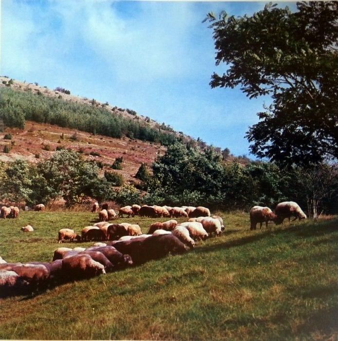 Как един овчар спести 80 млн. на държавата