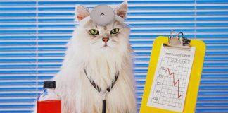 Учените са доказали – котка трябва да има във всеки дом!