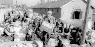 Преди 1989 г. едно ТКЗС изнасяше за година плодове и зеленчуци, колкото днес цяла България
