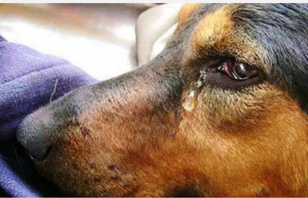 Когато го гушнах, той заплака. Никога не бях виждал толкова големи, чисти и топли сълзи…